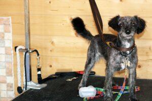 Dog Grooming 1